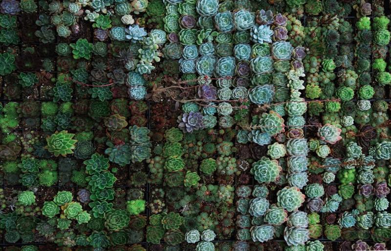 Zelena boja će donjeti harmoniju i mir u Vaš dom
