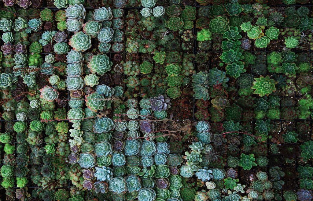 Zelená vnese do bytu rovnováhu a klid